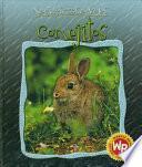Conejitos (Little Rabbits)