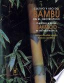 Cultivo y uso del bambú en el neotrópico