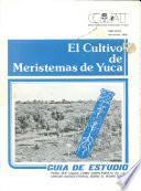 El cultivo de meristemas de yuca