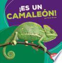 Es un camalen / It's a Chameleon