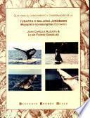 Gu¡a para el conocimiento y conservaci¢n de la yubarta o ballena jorobada