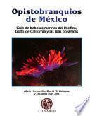 Opistobranquios de México