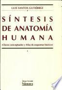 Síntesis de anatomía humana