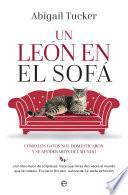 Un león en el sofá